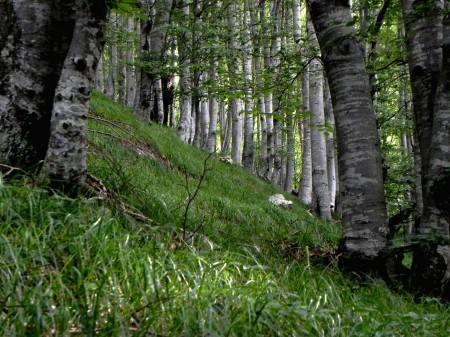 Bukov gozd