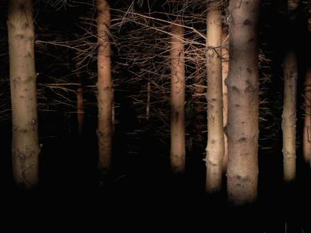 Prvi sončni žarki v smrekovem gozdu