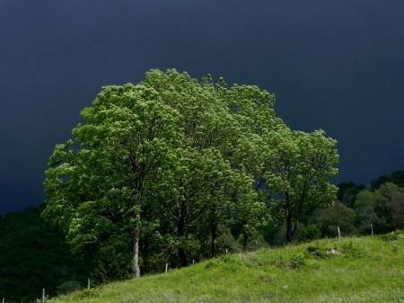 Tik pred nevihto